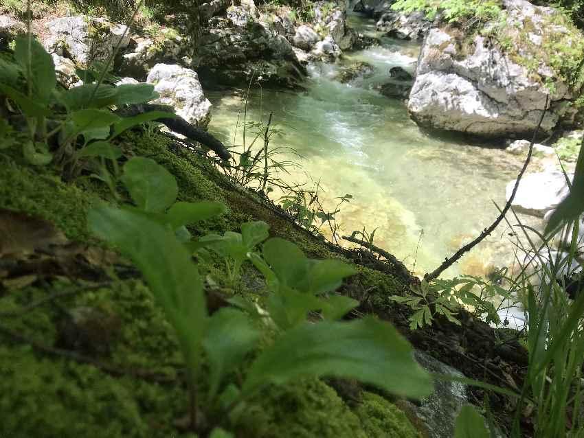 Frühlingswanderung Oberaudorf am Wasser